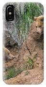Eurasian Brown Bear 17 IPhone Case
