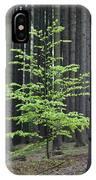 European Beech Tree In Noway Spruce IPhone Case