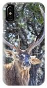 European Red Deer IPhone Case
