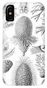Examples Of Coniferae From Kunstformen IPhone Case