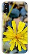 False Dandelion Or Cat's Ear In Five Finger Rapids Recreation Site Along Klondike Hwy-yt  IPhone Case