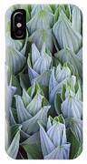 False Hellebore With Frost Colorado IPhone Case