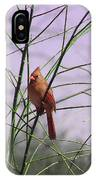 Female Cardinal In Willow IPhone Case