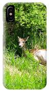 Female Deer Resting IPhone Case
