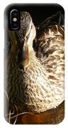 Female Mallard In Pond IPhone Case