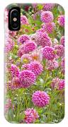 Field Of Pink Dahlias IPhone Case