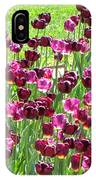 Field Of Purple Tulips 1 IPhone Case