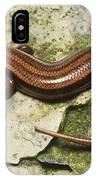 Five-lined Skink IPhone Case