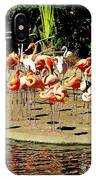 Flamingo Family Reunion IPhone Case