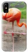 Flamingo Four IPhone Case