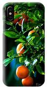 Florida Oranges IPhone Case