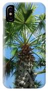 Florida Palm Tree IPhone Case