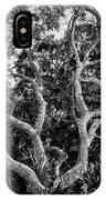 Florida Scrub Oaks Bw   IPhone Case