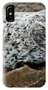Forlorn Seal IPhone Case