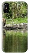 Fox At Water Hole IPhone Case
