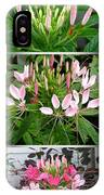 From Bud To Bloom - Cleome Named Pink Queen IPhone Case