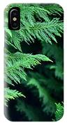 Fronds Of The Leyland Cypress IPhone Case