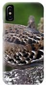 Galapagos Dove Galapagos Islands National Park Santa Cruz Island IPhone Case