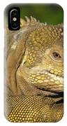Galapagos Land Iguana Isabella Island IPhone Case