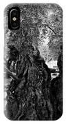 Garden Of Gethsemane Olive Tree IPhone Case