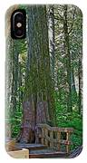 Giant Cedar Grove On Giant Cedars Trail In Mount Revelstoke Np-bc IPhone Case