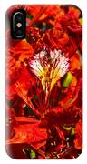 Giant Poinciana Blooms IPhone Case