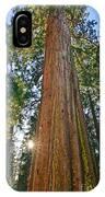 Giant Sequoia Trees Of Tuolumne Grove In Yosemite National Park. IPhone Case