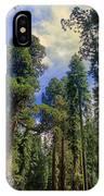 giant sequoias sequoiadendron gigantium yosemite NP IPhone Case