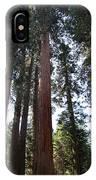 Giant Sequoias - Yosemite Park IPhone Case