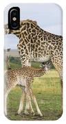 Giraffe Nuzzling Her Nursing Calf IPhone Case