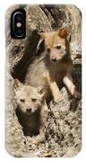 Golden Jackal Canis Aureus Cubs IPhone Case