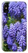 Grape Hyacinth At Thanksgiving Point - 1 IPhone Case