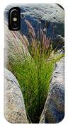 Grasses In Oasis On Borrego Palm Canyon Trail In Anza-borrego Desert Sp-ca IPhone Case