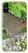 Gray Hairstreak Butterfly - Strymon Melinus IPhone Case