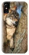 Gray Wolf In Tree Canis Lupus IPhone Case