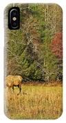 Grazing Elk IPhone Case