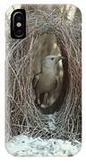 Great Bowerbird Male In Bower Australia IPhone Case