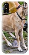 Great Dane Sitting On Park Bench IPhone Case