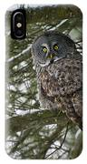 Great Gray Owl Pictures 780 IPhone Case