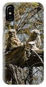 Great Horned Owlets Photo IPhone Case