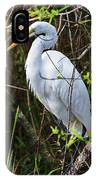 Great White Egret In The Wild IPhone Case
