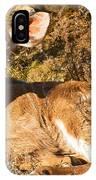 Greater Kudu Calf IPhone Case