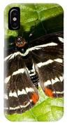 Grecian Shoemaker Butterfly IPhone Case