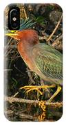 Green Heron Basking In Sunlight IPhone Case