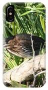 Green Heron - Juvenile IPhone Case