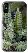 Green Resurrection Fern Air Plant IPhone Case