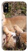 Grey Fox Kitts At Play IPhone Case
