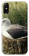 Grey-headed Albatross Nesting Chile IPhone Case