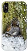 Grey Squirrel With Its Food Store IPhone Case