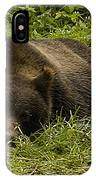 Grizzly Cub  #0863 IPhone Case
